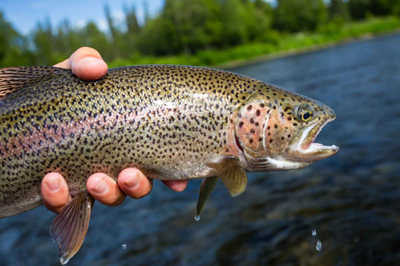 DEC Invites Public Comment on Draft Trout Stream Management Plan